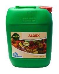 algex