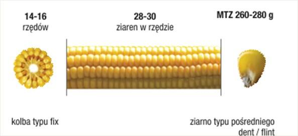 exapic02