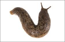 oferta-moluskocydy