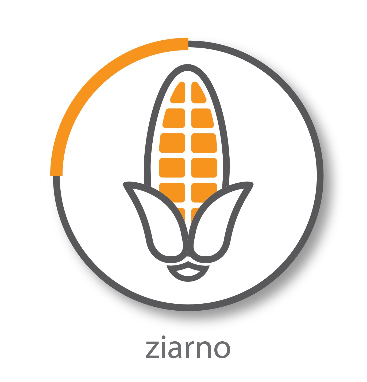 ziarno-01