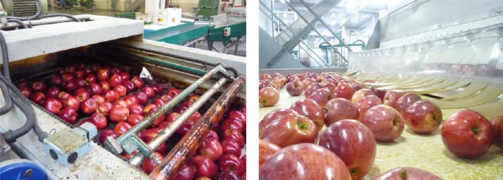 woskowanie jabłek decco