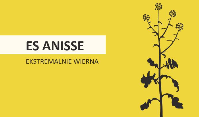 Rzepak odmiany ES Anisse